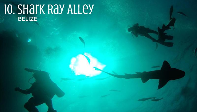10_SharkRayAlley_edited-1